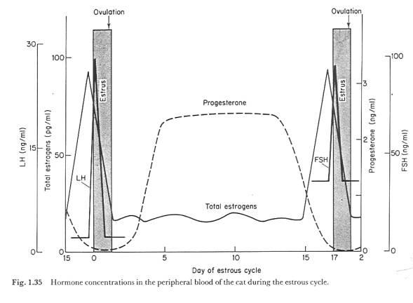 ciclo de esteroides para masa muscular